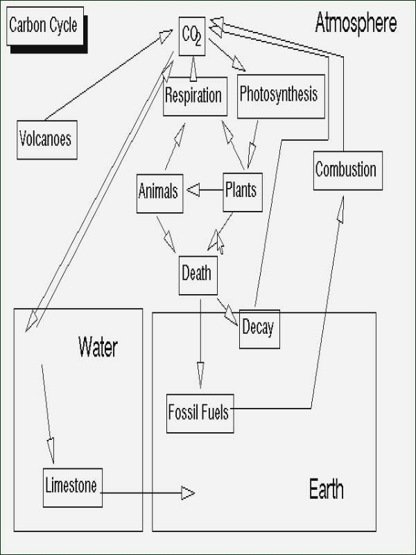 Energy Flow In Ecosystems Worksheet Luxury Energy Flow In Ecosystems Worksheet