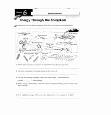 Energy Flow In Ecosystems Worksheet Luxury Energy Through the Ecosystem 3rd 8th Grade Worksheet