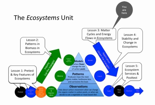 Energy Flow In Ecosystems Worksheet Unique 3 3 Energy Flow In Ecosystems Worksheet Answers