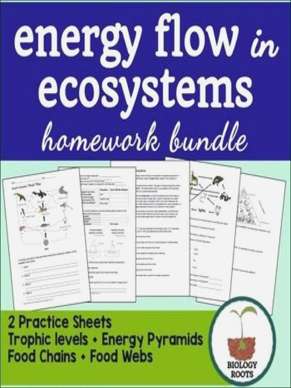 Energy Flow In Ecosystems Worksheet Unique Energy Flow In Ecosystems Worksheet
