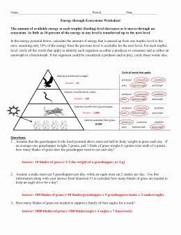 Energy Flow Worksheet Answers Beautiful Energy Through An Ecosystem Worksheet Answer Key