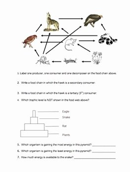 Energy Flow Worksheet Answers Best Of Ecology Energy Flow In Ecosystems by Biology Roots