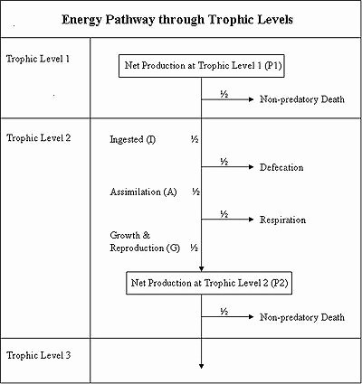 Energy Flow Worksheet Answers Elegant 10 Best Of Energy Levels Worksheet Energy Flow