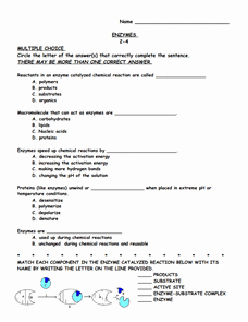 Enzyme Reactions Worksheet Answer Key Best Of Enzymes 9th 12th Grade Worksheet