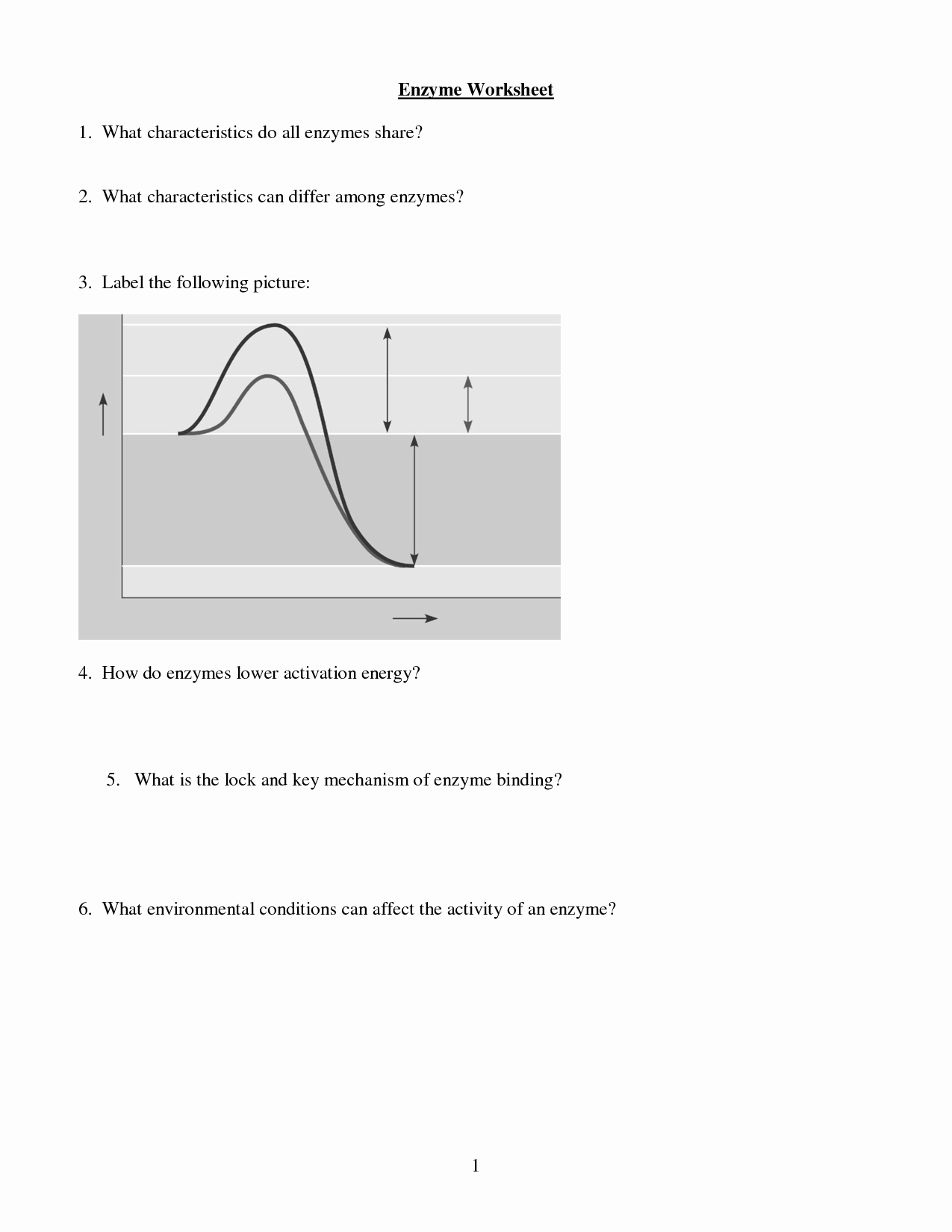 Enzyme Reactions Worksheet Answer Key Lovely 12 Best Of Enzyme Graph Worksheet Enzymes
