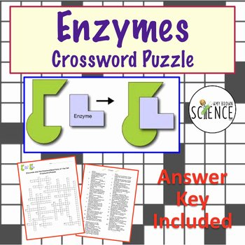 Enzyme Reactions Worksheet Answer Key New Enzymes Crossword Puzzle by Amy Brown Science