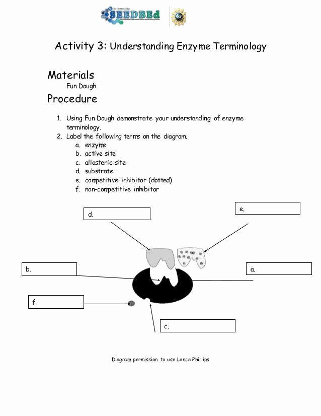 Enzyme Reactions Worksheet Answers Inspirational Enzymes Worksheet