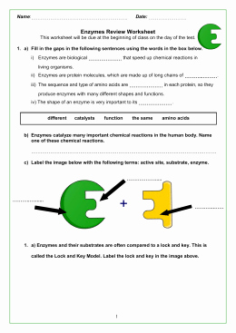 Enzyme Reactions Worksheet Answers Lovely Studylib Essys Homework Help Flashcards Research