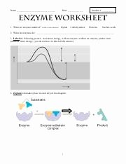 Enzyme Reactions Worksheet Answers Unique Enzyme Activity Worksheet Name Date Enzyme Activity
