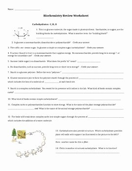 Enzyme Review Worksheet Answers Awesome Biochemistry Review Worksheet by Dee