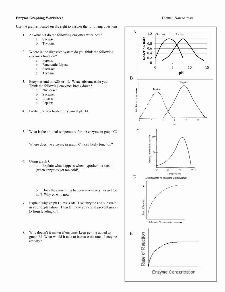 Enzyme Review Worksheet Answers Beautiful Enzyme Graphing Worksheet