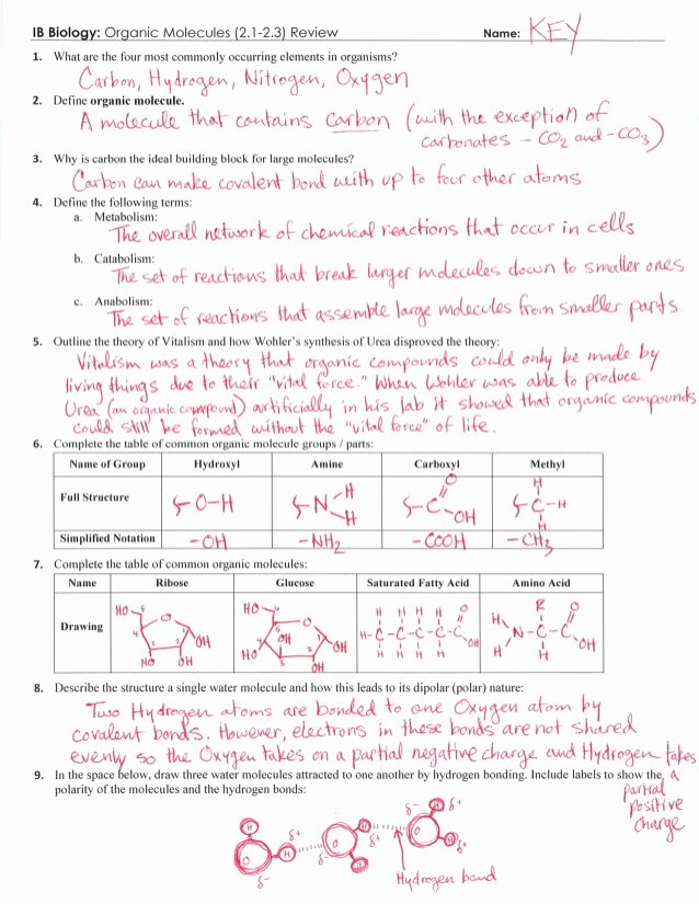 Enzyme Review Worksheet Answers Beautiful Ib organic Molecules Review Key 2 1 2 3