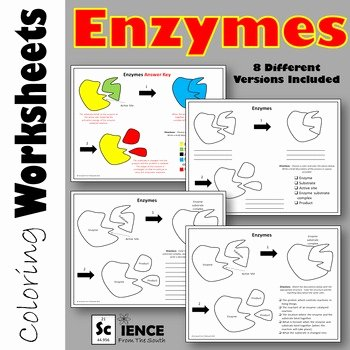 Enzyme Review Worksheet Answers Elegant Enzymes Coloring Worksheets with 8 Differentiated Versions