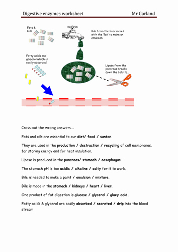 Enzyme Review Worksheet Answers Lovely Enzymes & Digestion by Dave Gar Uk Teaching Resources Tes
