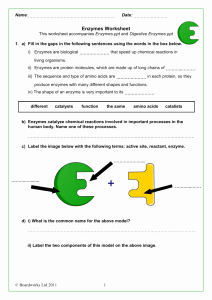 Enzyme Review Worksheet Answers Lovely Studylib Essys Homework Help Flashcards Research