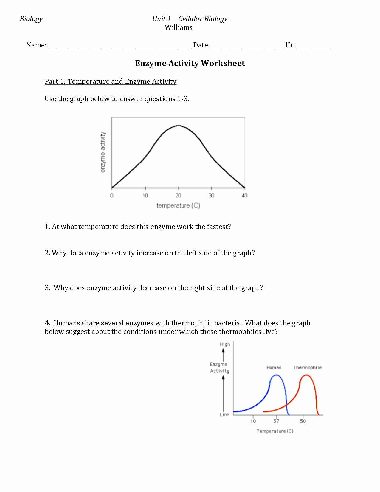 Enzymes Worksheet Answer Key Elegant 14 Best Of How Enzymes Work Worksheet Biology