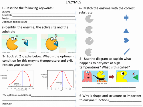 Enzymes Worksheet Answer Key Inspirational Enzymes Worksheet by Cjbresources Teaching Resources Tes