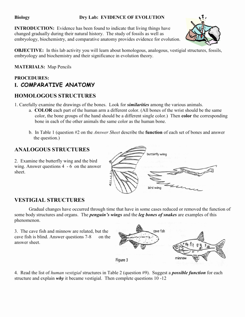 Evidence for Evolution Worksheet Answers Luxury Worksheet Evidence Evolution Worksheet Worksheet Fun