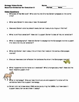 Evidence for Evolution Worksheet Answers New Biology Video Guide Bozeman Evidence for Evolution Ii
