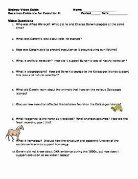Evidence for Evolution Worksheet Elegant Biology Video Guide Bozeman Evidence for Evolution Ii