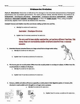 Evidence for Evolution Worksheet Unique Evolution Activity Evidence for Evolution Identification