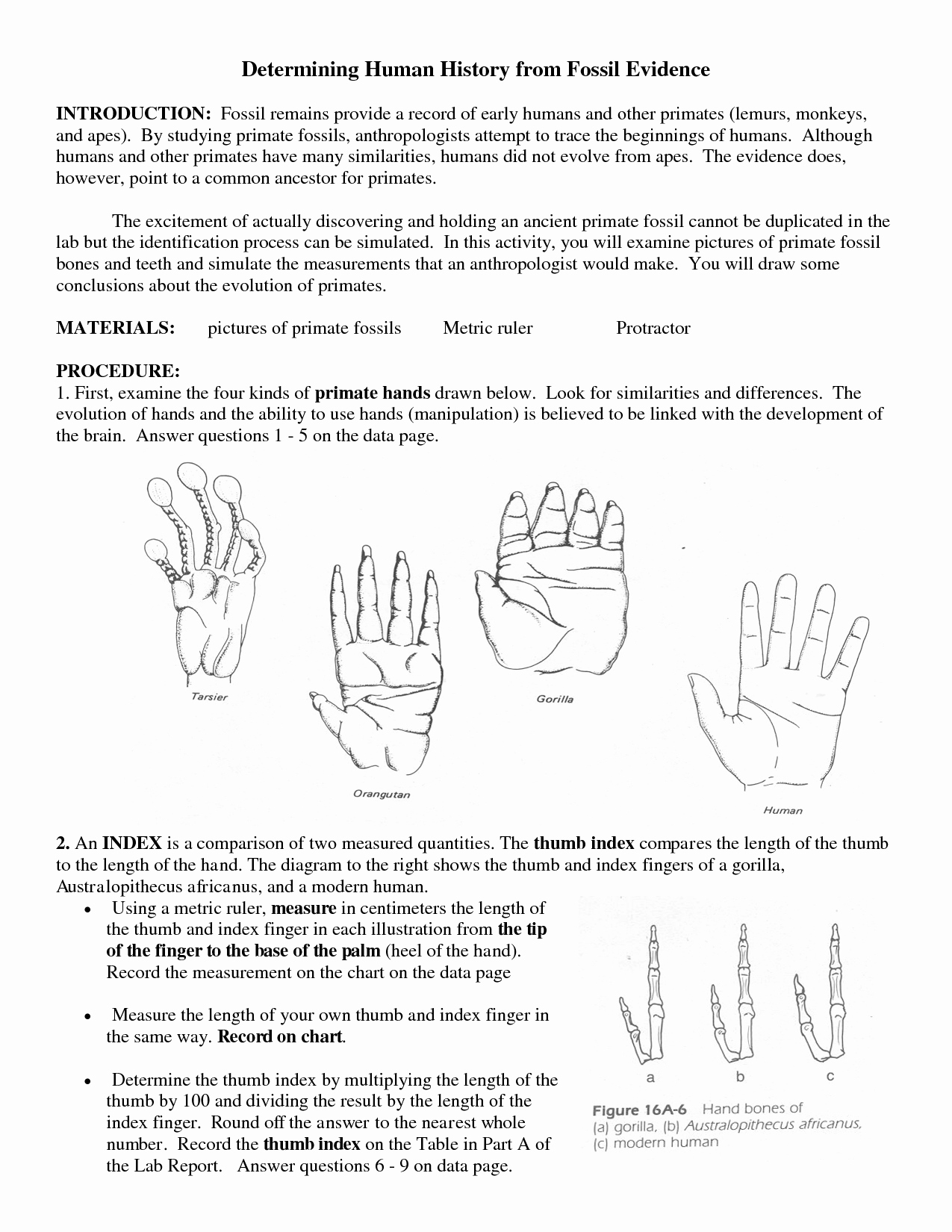 Evidence Of Evolution Worksheet Answers Awesome 15 Best Of Section 1 Reinforcement Fossils