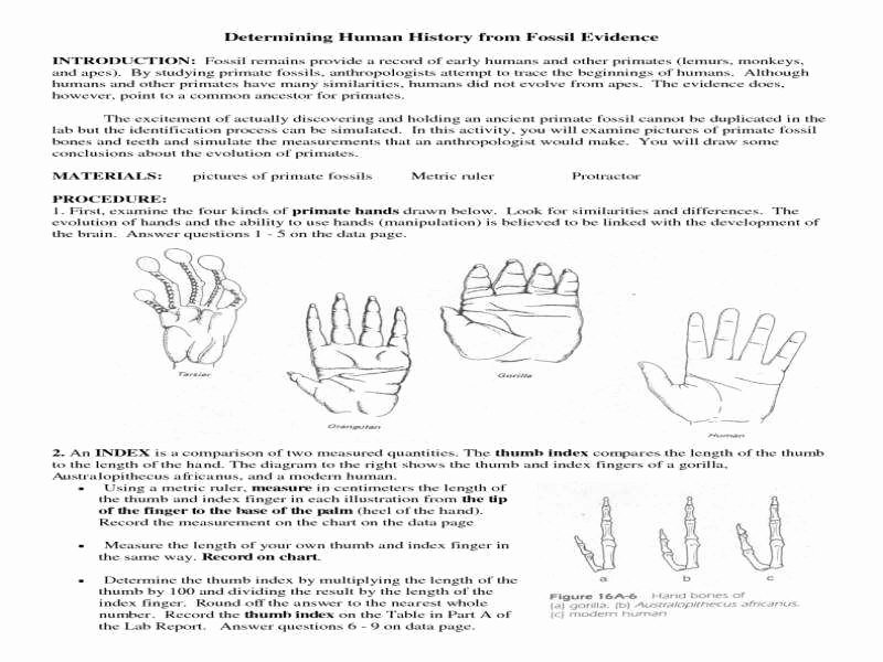 Evidence Of Evolution Worksheet Answers Beautiful Evidence for Evolution Worksheet