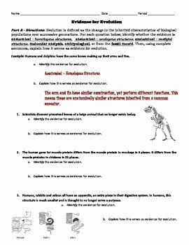Evidence Of Evolution Worksheet Answers Elegant Evolution Activity Evidence for Evolution Identification