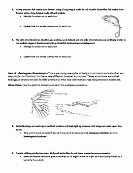 Evidence Of Evolution Worksheet Answers Lovely Evolution Activity Evidence for Evolution Identification