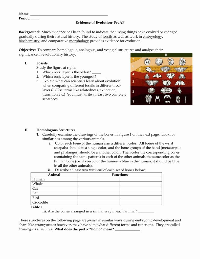 Evidence Of Evolution Worksheet Elegant Worksheets Evidence Evolution Worksheet Cheatslist