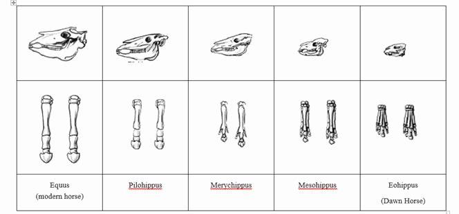 Evidence Of Evolution Worksheet Inspirational 12 Best Of Modern Biology Worksheet Answers