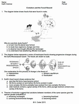 Evidence Of Evolution Worksheet Inspirational Worksheet Evolution & the Fossil Record Editable
