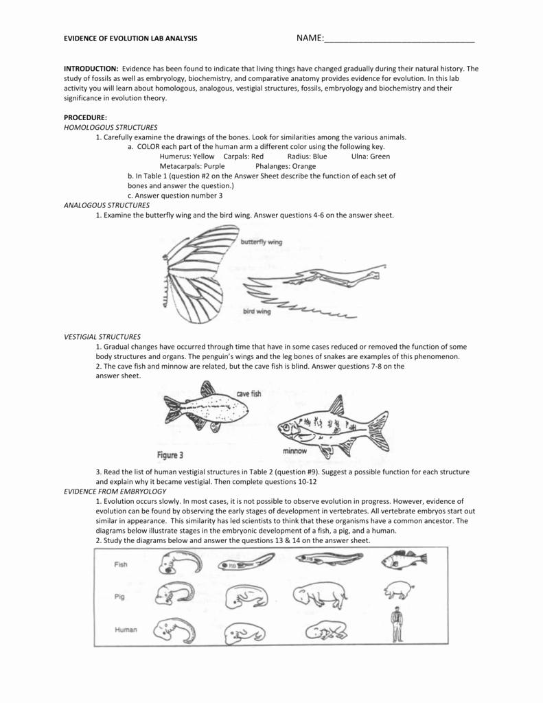 Evidence Of Evolution Worksheet New Worksheets Evidence Evolution Worksheet atidentity