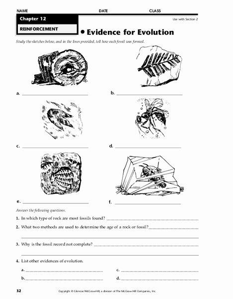 Evidence Of Evolution Worksheet Unique Evidence for Evolution Worksheet for 7th 12th Grade
