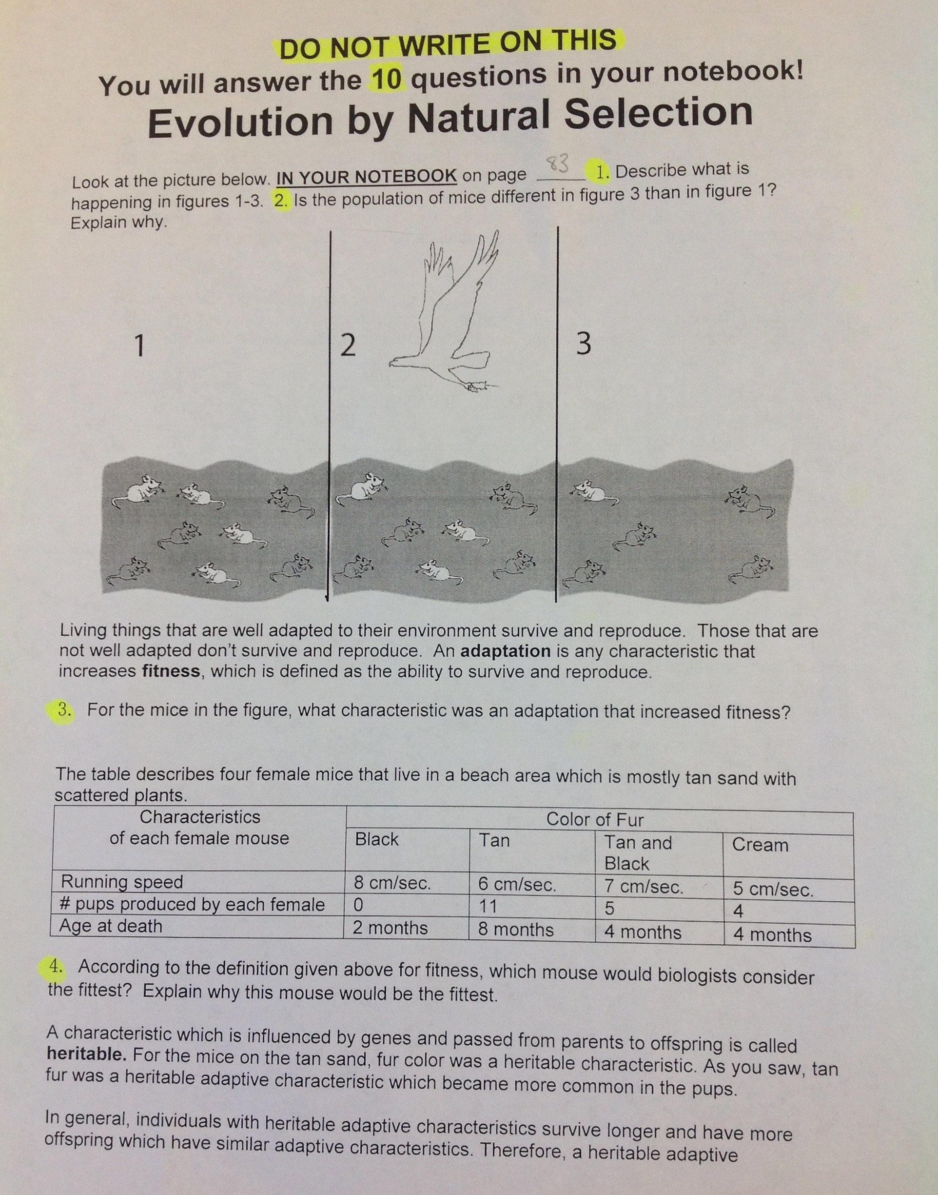 Evolution and Natural Selection Worksheet Awesome origins Of Life Natural Selection & Evolution