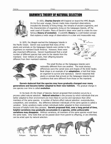 Evolution and Natural Selection Worksheet Best Of Evolution Evolution by Natural Selection Worksheet