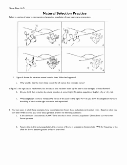 Evolution and Natural Selection Worksheet Lovely Natural Selection Worksheet 1 Summer Research Program for