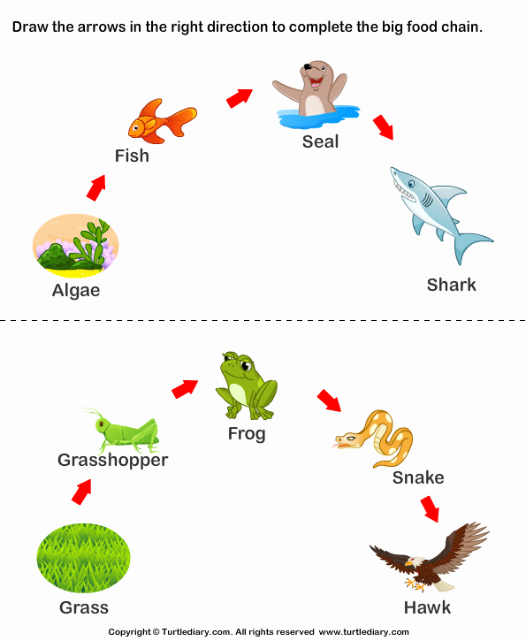Food Chain Worksheet Answers Awesome Plete the Food Chain Fill In Arrows Worksheet