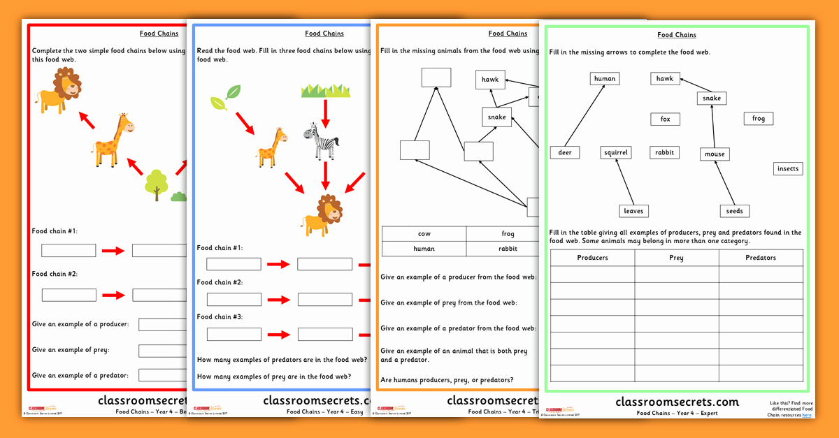 Food Chain Worksheet Answers Beautiful Year 4 Food Chains and Food Webs Science Worksheets