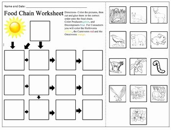 Food Chain Worksheet Answers Elegant Food Chain Worksheet by Alexandra Smith