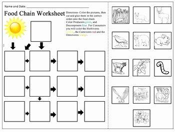 Food Chain Worksheet Answers Elegant Food Chain Worksheet by Alexandra Smith