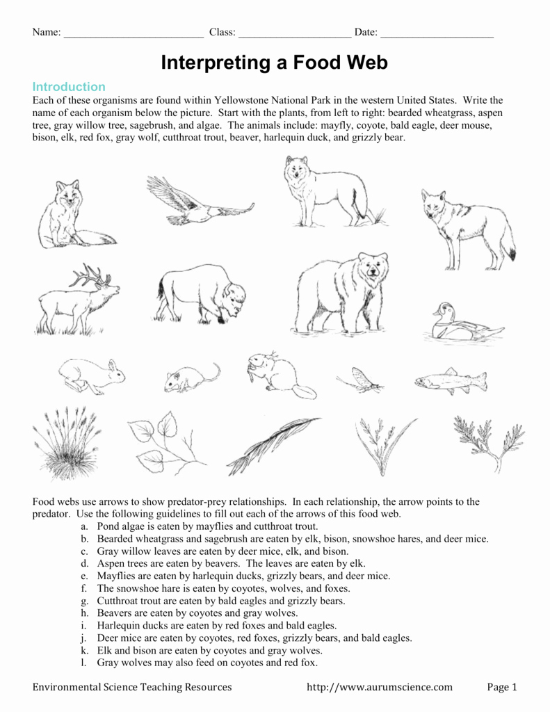 Food Chain Worksheet Answers Lovely Food Chains and Webs Skills Worksheet Answers Key