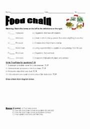 Food Chain Worksheet Answers Luxury English Worksheets Food Chain assessment