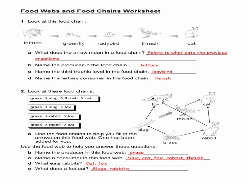 Food Chain Worksheet Answers New Food Chains and Food Webs Worksheet Answers Free