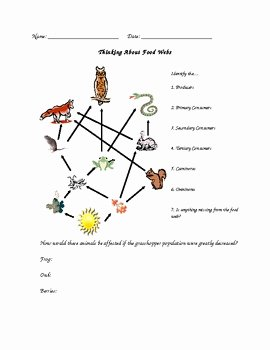 Food Chain Worksheet Answers New Food Web assignment Answer Key