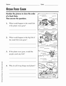 Food Chain Worksheet Answers New Ocean Food Chain Worksheet for 2nd 4th Grade