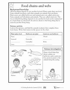 Food Chain Worksheet Pdf Beautiful 12 Best Of Worksheets Food Chain Web Pyramid Food