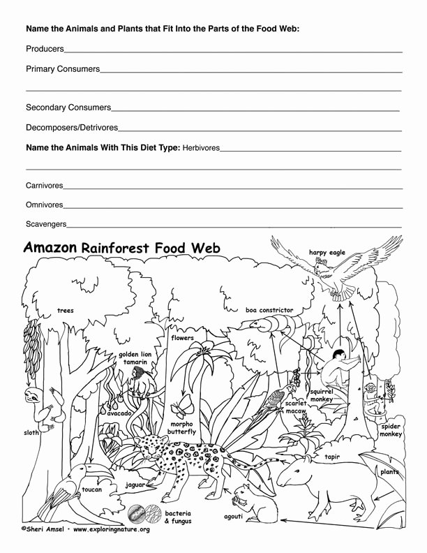 Food Chain Worksheet Pdf Beautiful Amazon Rainforest Food Web Activity