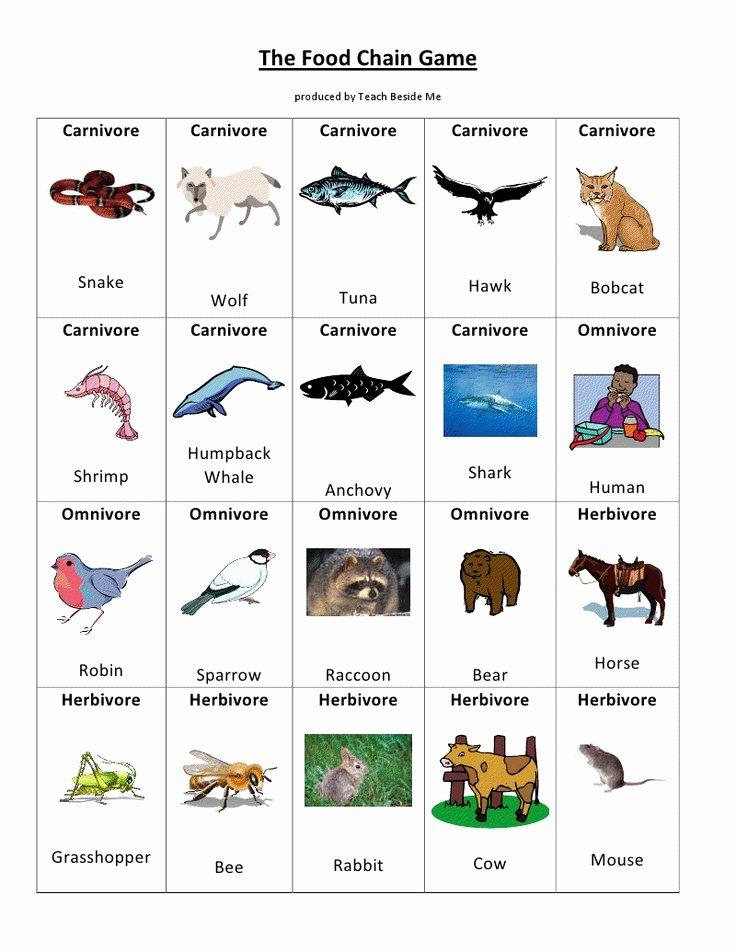 Food Chain Worksheet Pdf Beautiful Food Chain Game Pdf Google Drive