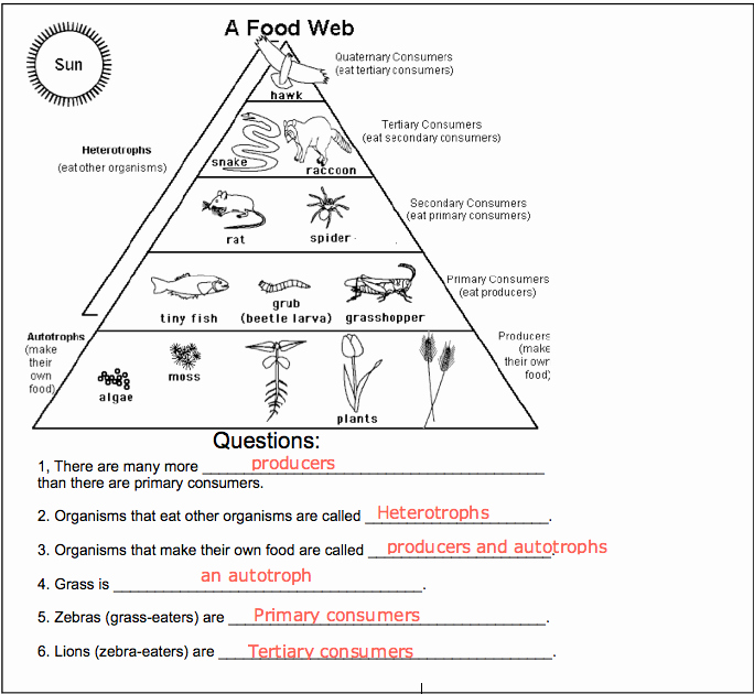 Food Chain Worksheet Pdf Beautiful Pin by Carmen Arruzza On Projects to Try